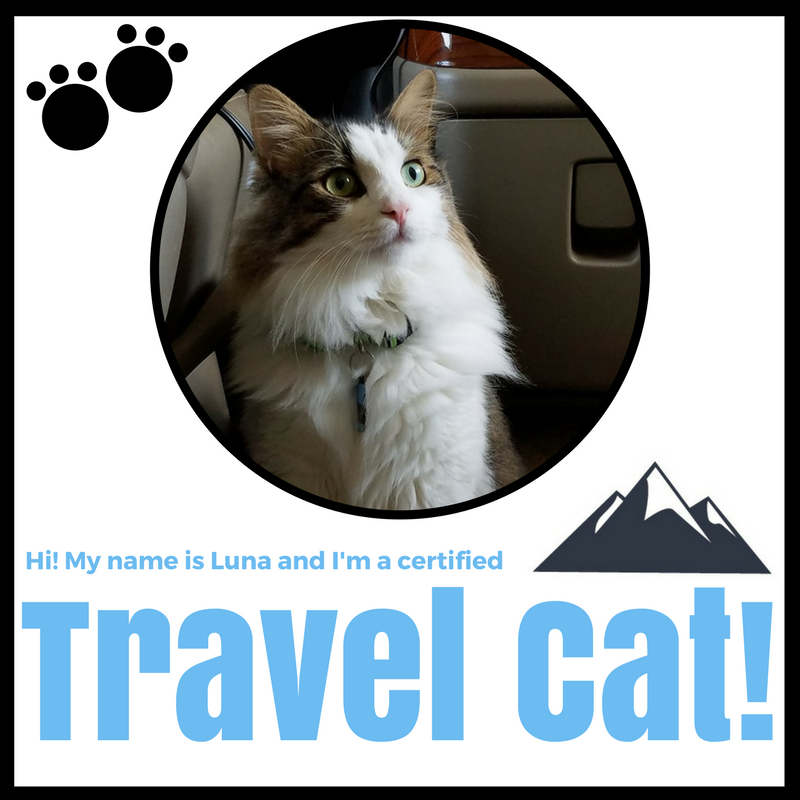 Travel Cat Luna