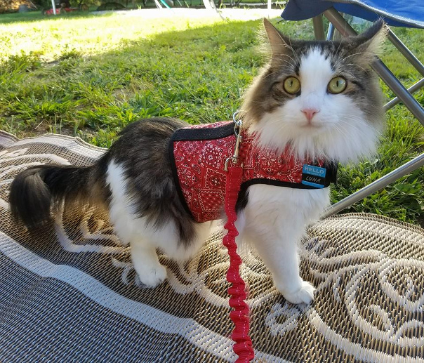 RVing With Pets: What You Need To Know (2020 Edition