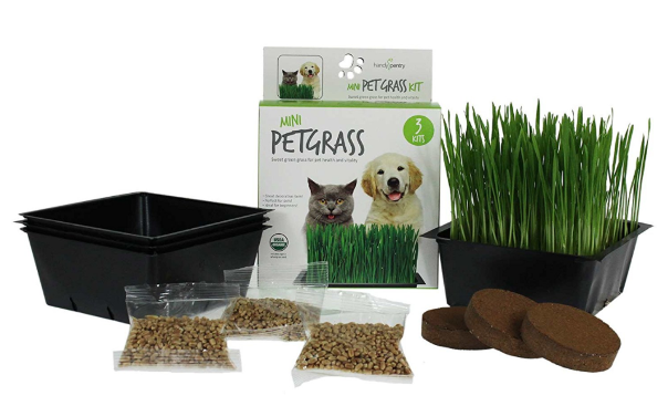 Mini Organic Cat Grass