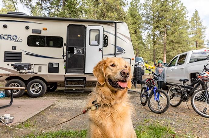 RV Pet Insurance